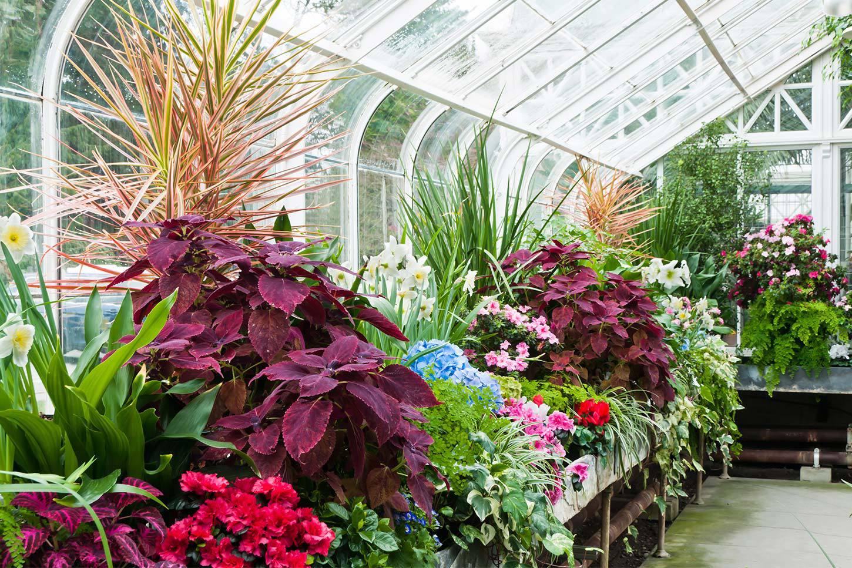Znalezione obrazy dla zapytania winter garden
